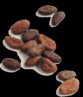 Κόκκοι Κακάο Περού